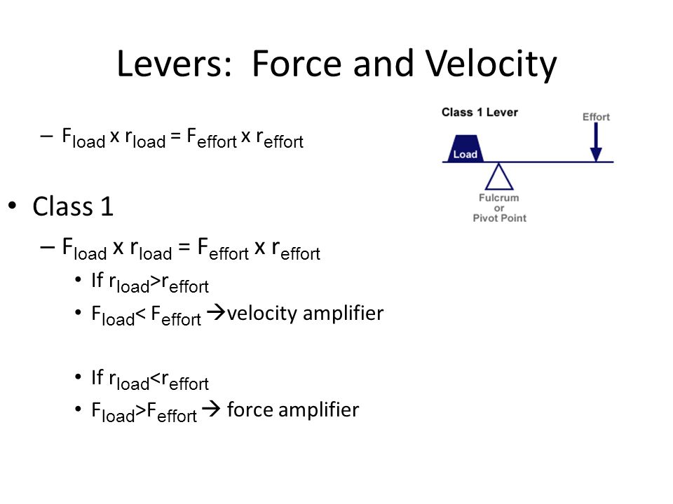 Levers: Force and Velocity – F load x r load = F effort x r effort Class 1 – F load x r load = F effort x r effort If r load >r effort F load < F effort  velocity amplifier If r load <r effort F load >F effort  force amplifier