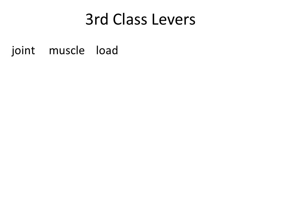 3rd Class Levers joint muscle load