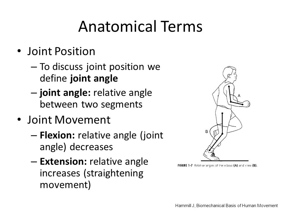 Anatomical Terms Joint Position – To discuss joint position we define joint angle – joint angle: relative angle between two segments Joint Movement – Flexion: relative angle (joint angle) decreases – Extension: relative angle increases (straightening movement) Hammill J, Biomechanical Basis of Human Movement