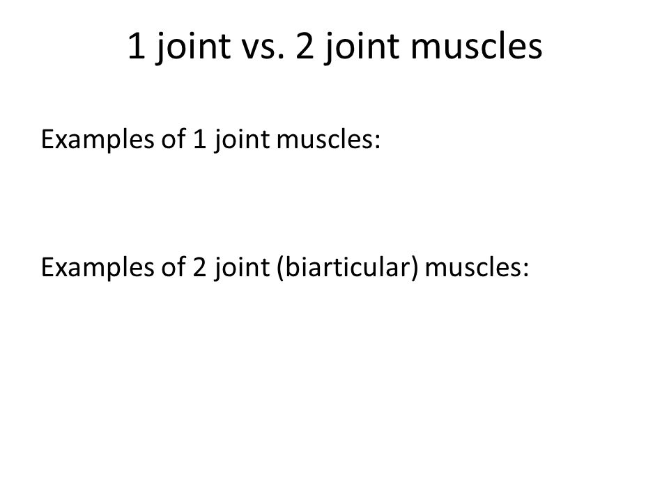 1 joint vs. 2 joint muscles Examples of 1 joint muscles: Examples of 2 joint (biarticular) muscles: