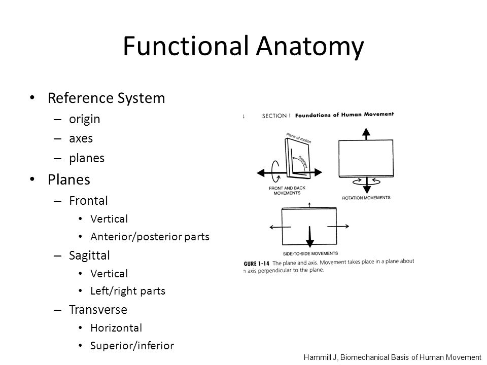 Functional Anatomy Reference System – origin – axes – planes Planes – Frontal Vertical Anterior/posterior parts – Sagittal Vertical Left/right parts – Transverse Horizontal Superior/inferior Hammill J, Biomechanical Basis of Human Movement