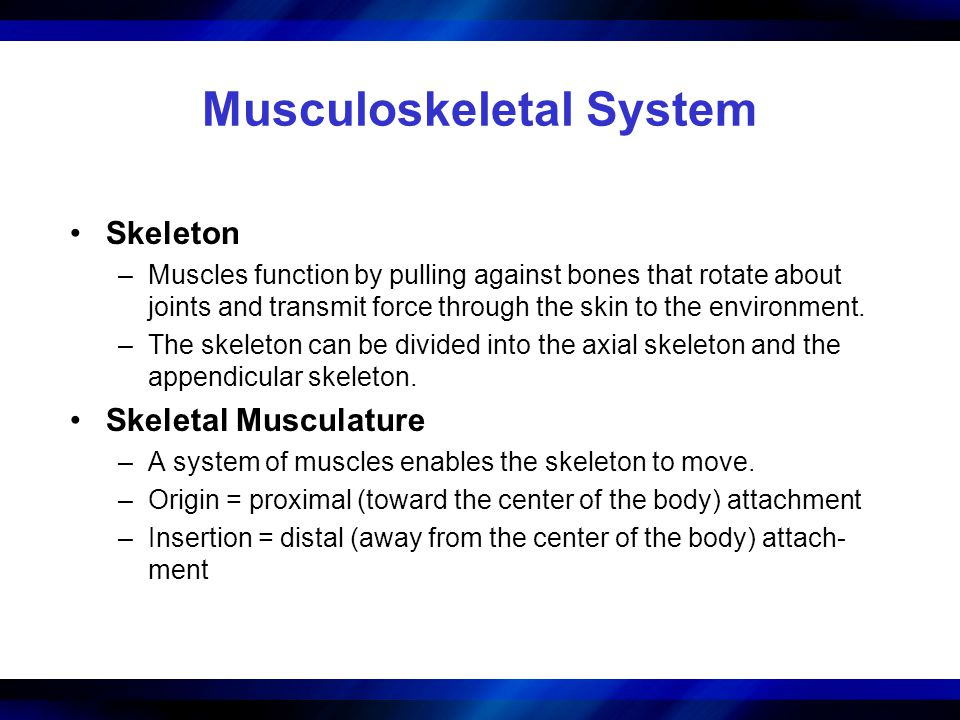 Musculoskeletal System Skeleton –Muscles function by pulling against bones that rotate about joints and transmit force through the skin to the environ