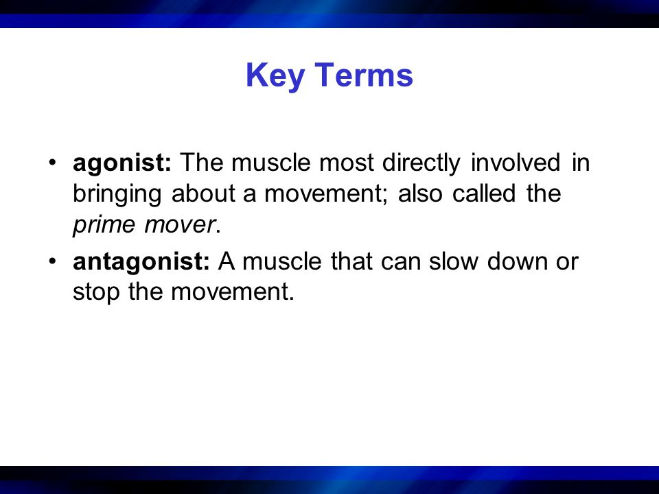 Key Terms agonist: The muscle most directly involved in bringing about a movement; also called the prime mover. antagonist: A muscle that can slow dow