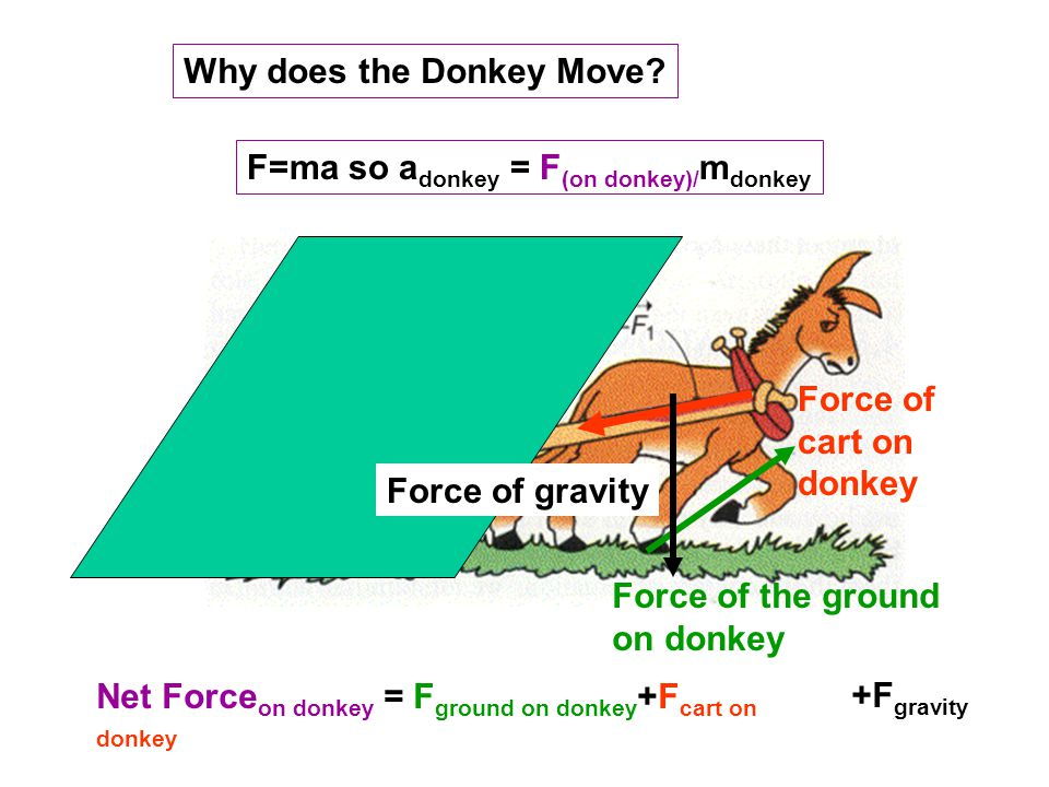 Why does the Donkey Move.