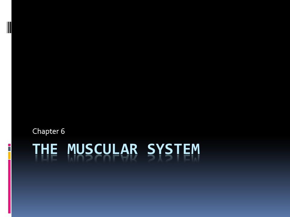 Muscular System  The term muscular system applies specifically to skeletal muscle.