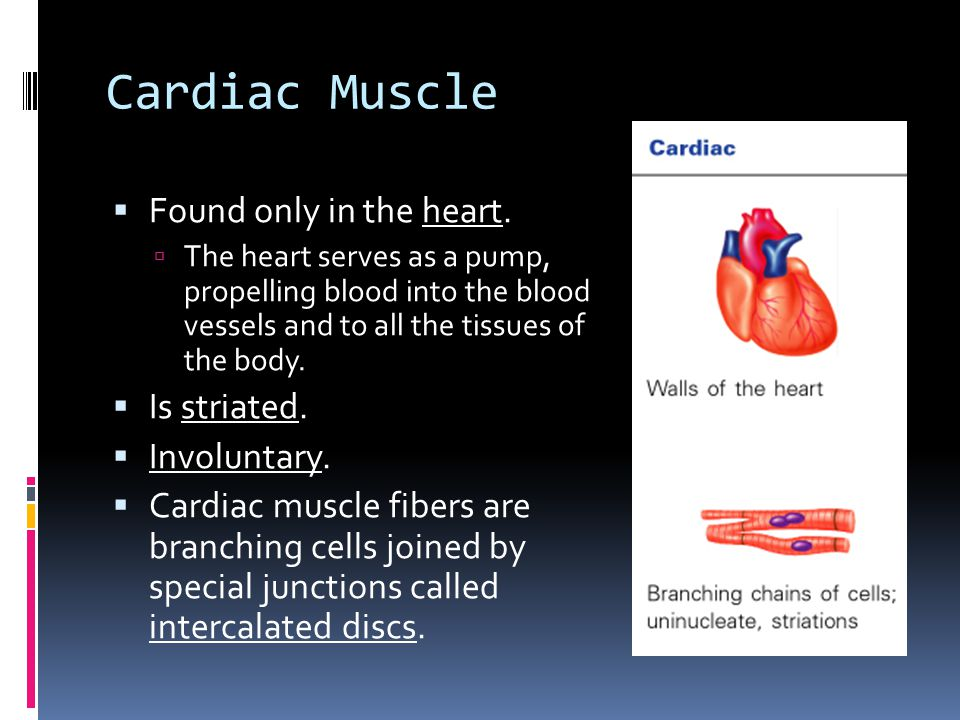 Cardiac Muscle  Found only in the heart.