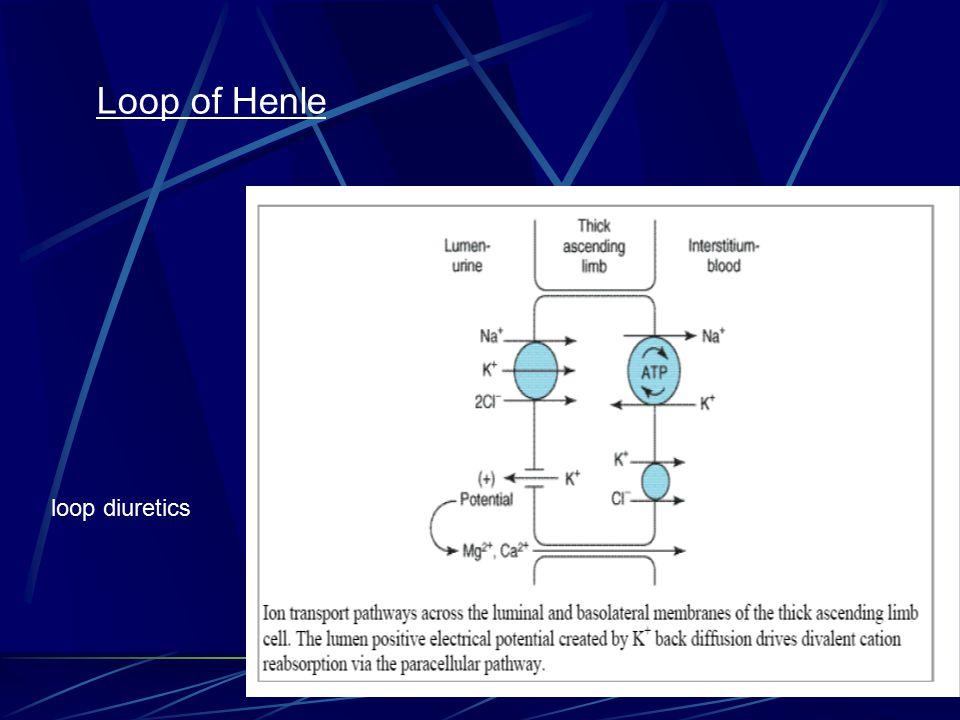 Loop of Henle loop diuretics