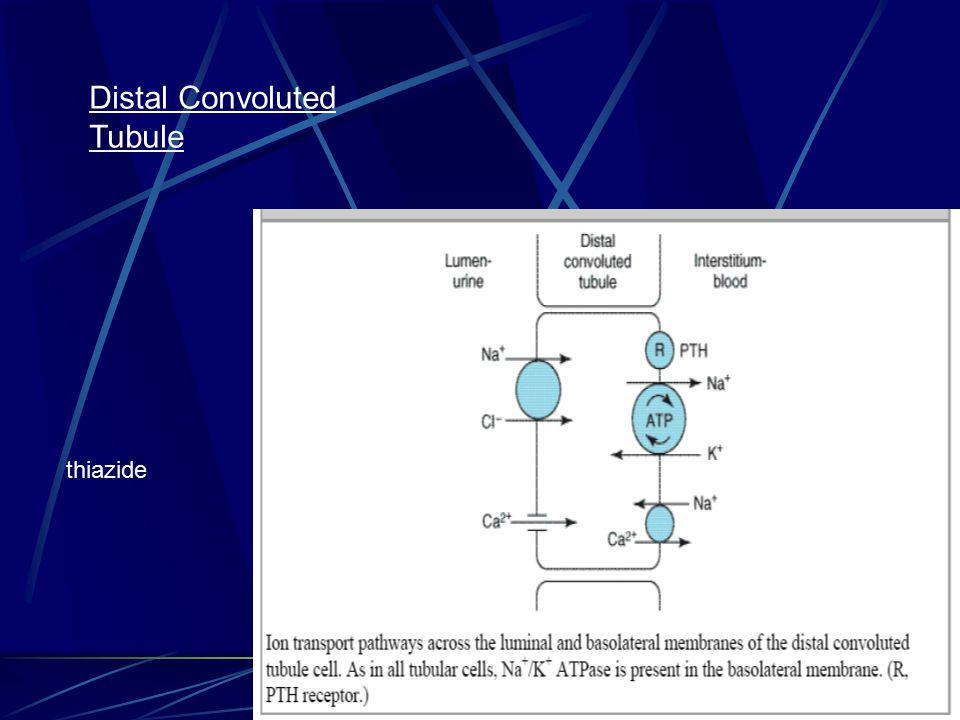 Distal Convoluted Tubule thiazide