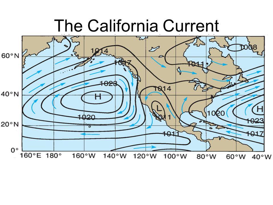 The California Current Mesoscale eddies
