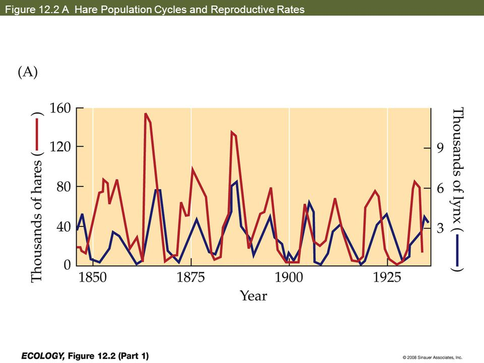 Figure 12.2 B Hare Population Cycles and Reproductive Rates - Hypotheses?