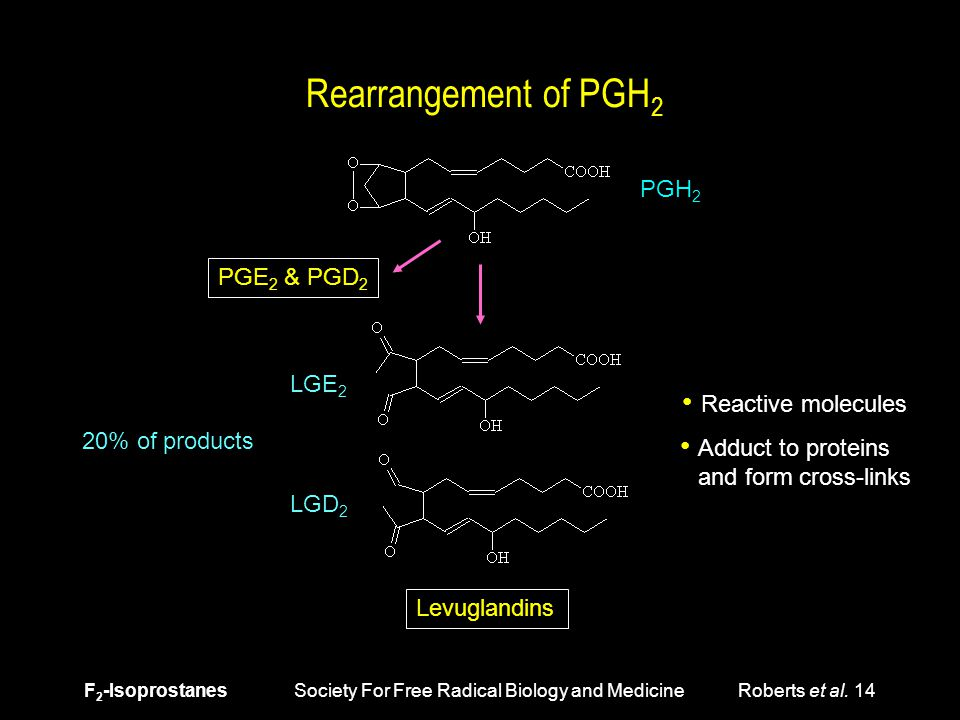 F 2 -Isoprostanes Society For Free Radical Biology and Medicine Roberts et al. 14 Rearrangement of PGH 2 PGE 2 & PGD 2 PGH 2 Reactive molecules Adduct