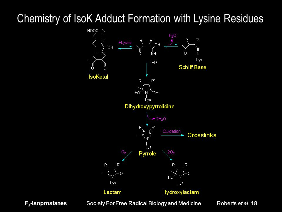F 2 -Isoprostanes Society For Free Radical Biology and Medicine Roberts et al. 18 Chemistry of IsoK Adduct Formation with Lysine Residues