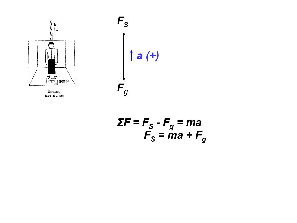 FSFS FgFg a (+) ΣF = F S - F g = ma F S = ma + F g