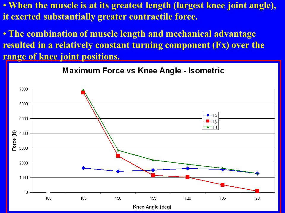 When the muscle is at its greatest length (largest knee joint angle), it exerted substantially greater contractile force.