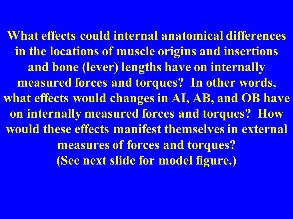 What effects could internal anatomical differences in the locations of muscle origins and insertions and bone (lever) lengths have on internally measured forces and torques.