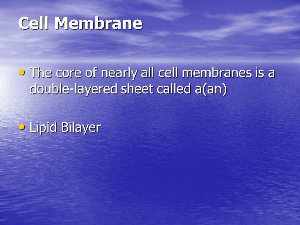 Cell Membrane The core of nearly all cell membranes is a double-layered sheet called a(an) The core of nearly all cell membranes is a double-layered s