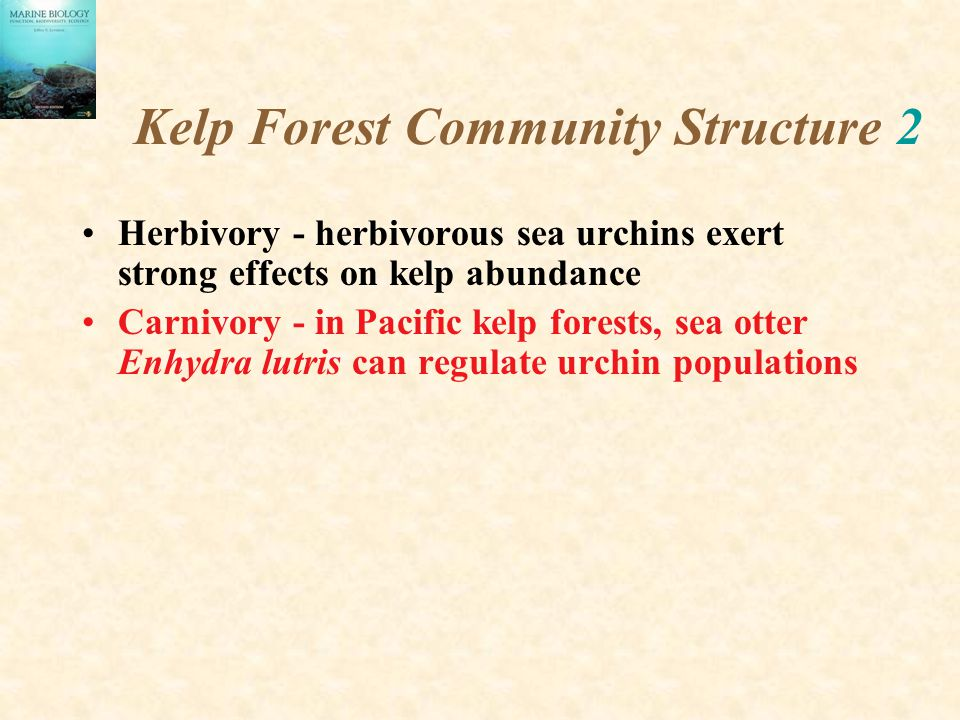 Kelp Forest Community Structure 2 Herbivory - herbivorous sea urchins exert strong effects on kelp abundance Carnivory - in Pacific kelp forests, sea otter Enhydra lutris can regulate urchin populations