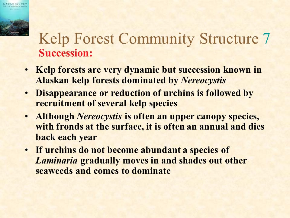 Kelp Forest Community Structure 7 Kelp forests are very dynamic but succession known in Alaskan kelp forests dominated by Nereocystis Disappearance or reduction of urchins is followed by recruitment of several kelp species Although Nereocystis is often an upper canopy species, with fronds at the surface, it is often an annual and dies back each year If urchins do not become abundant a species of Laminaria gradually moves in and shades out other seaweeds and comes to dominate Succession: