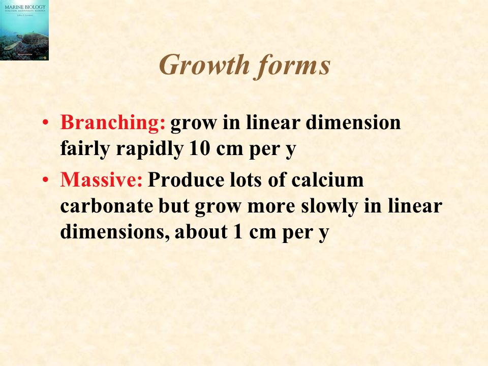 Growth forms Branching: grow in linear dimension fairly rapidly 10 cm per y Massive: Produce lots of calcium carbonate but grow more slowly in linear
