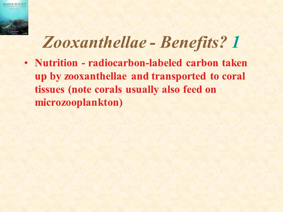 Zooxanthellae - Benefits? 1 Nutrition - radiocarbon-labeled carbon taken up by zooxanthellae and transported to coral tissues (note corals usually als