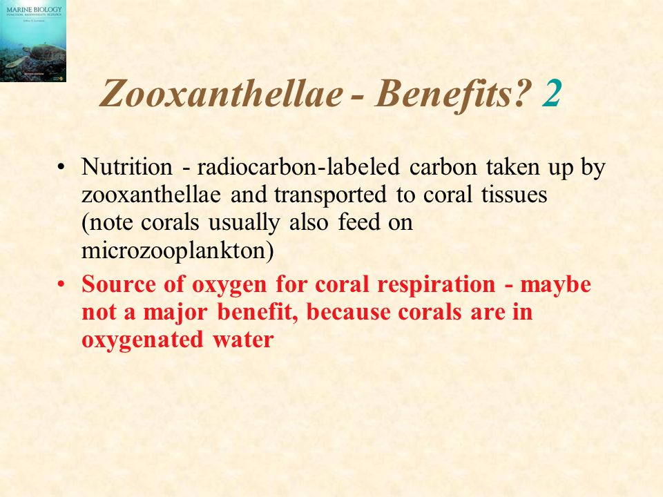 Zooxanthellae - Benefits? 2 Nutrition - radiocarbon-labeled carbon taken up by zooxanthellae and transported to coral tissues (note corals usually als
