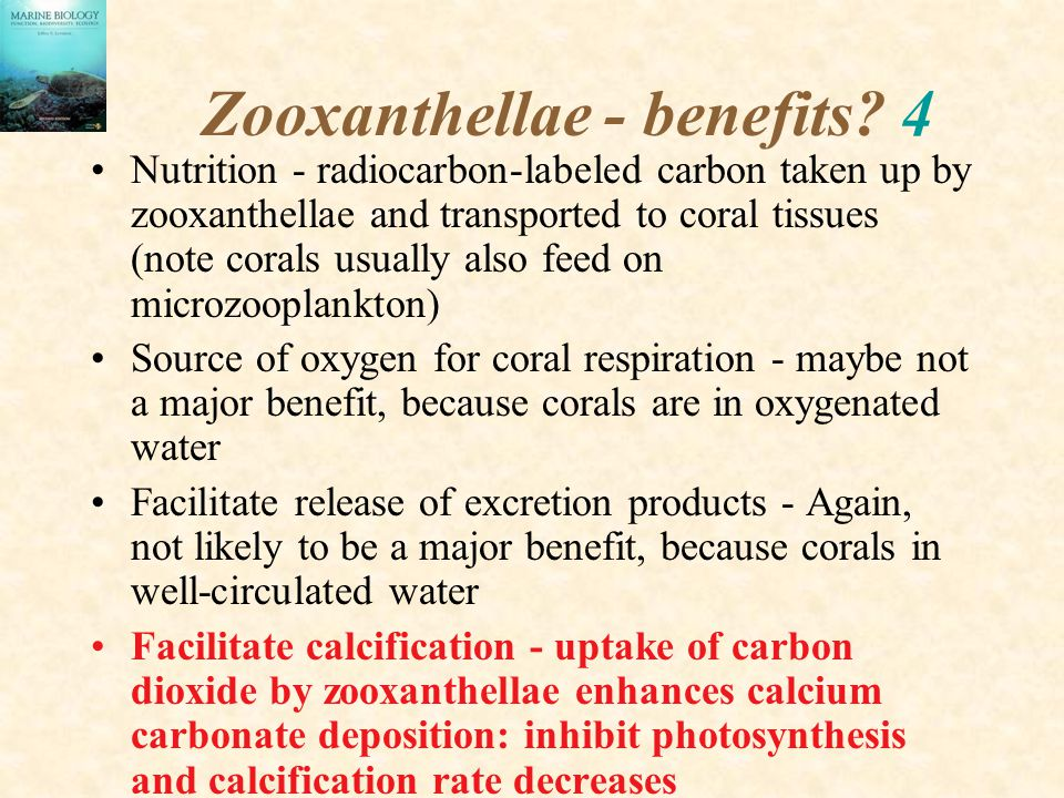 Zooxanthellae - benefits? 4 Nutrition - radiocarbon-labeled carbon taken up by zooxanthellae and transported to coral tissues (note corals usually als