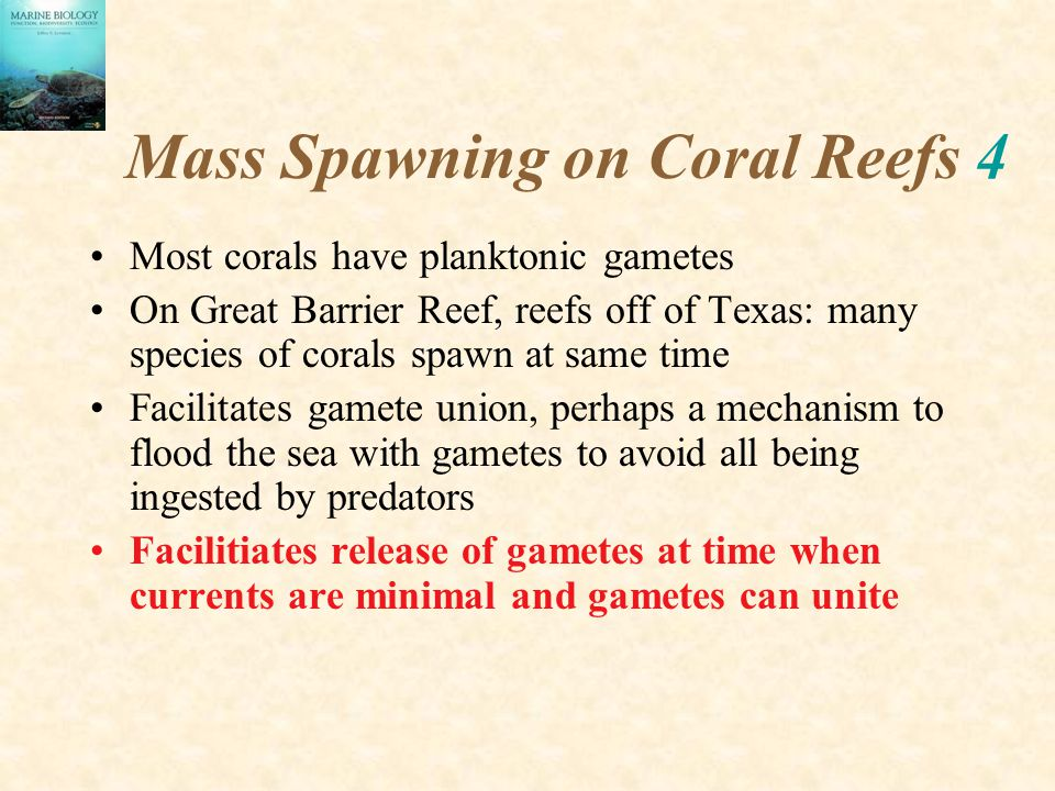 Mass Spawning on Coral Reefs 4 Most corals have planktonic gametes On Great Barrier Reef, reefs off of Texas: many species of corals spawn at same tim