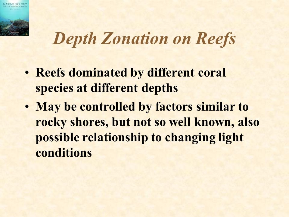 Depth Zonation on Reefs Reefs dominated by different coral species at different depths May be controlled by factors similar to rocky shores, but not so well known, also possible relationship to changing light conditions