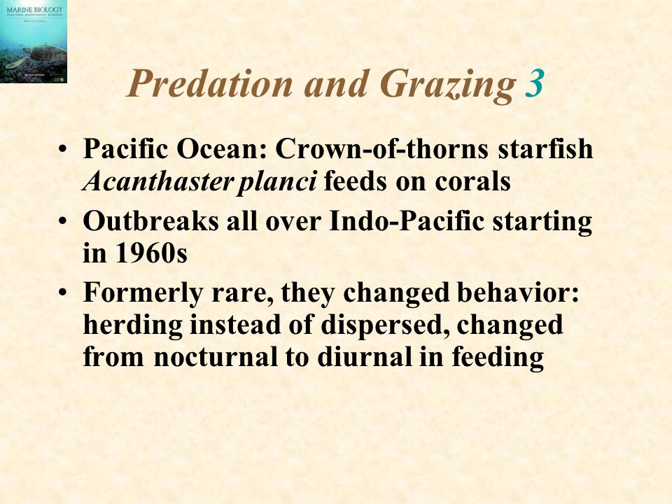 Predation and Grazing 3 Pacific Ocean: Crown-of-thorns starfish Acanthaster planci feeds on corals Outbreaks all over Indo-Pacific starting in 1960s Formerly rare, they changed behavior: herding instead of dispersed, changed from nocturnal to diurnal in feeding
