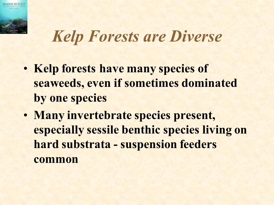 Kelp Forests are Diverse Kelp forests have many species of seaweeds, even if sometimes dominated by one species Many invertebrate species present, especially sessile benthic species living on hard substrata - suspension feeders common