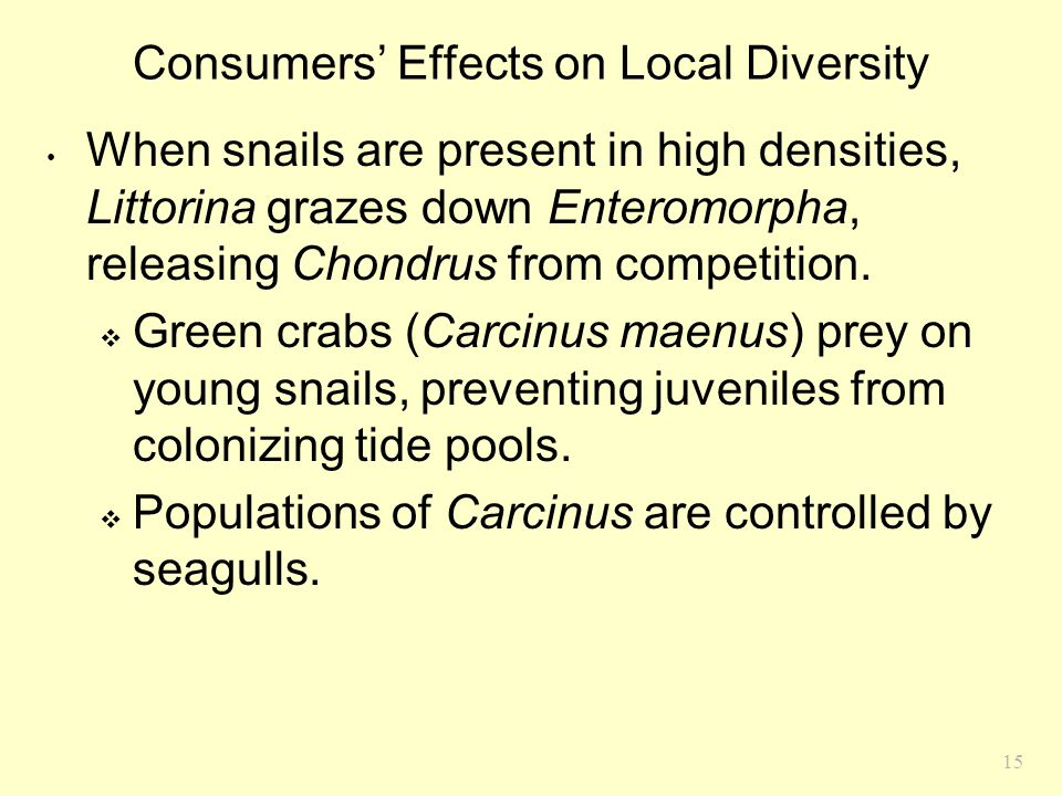 15 Consumers' Effects on Local Diversity When snails are present in high densities, Littorina grazes down Enteromorpha, releasing Chondrus from compet