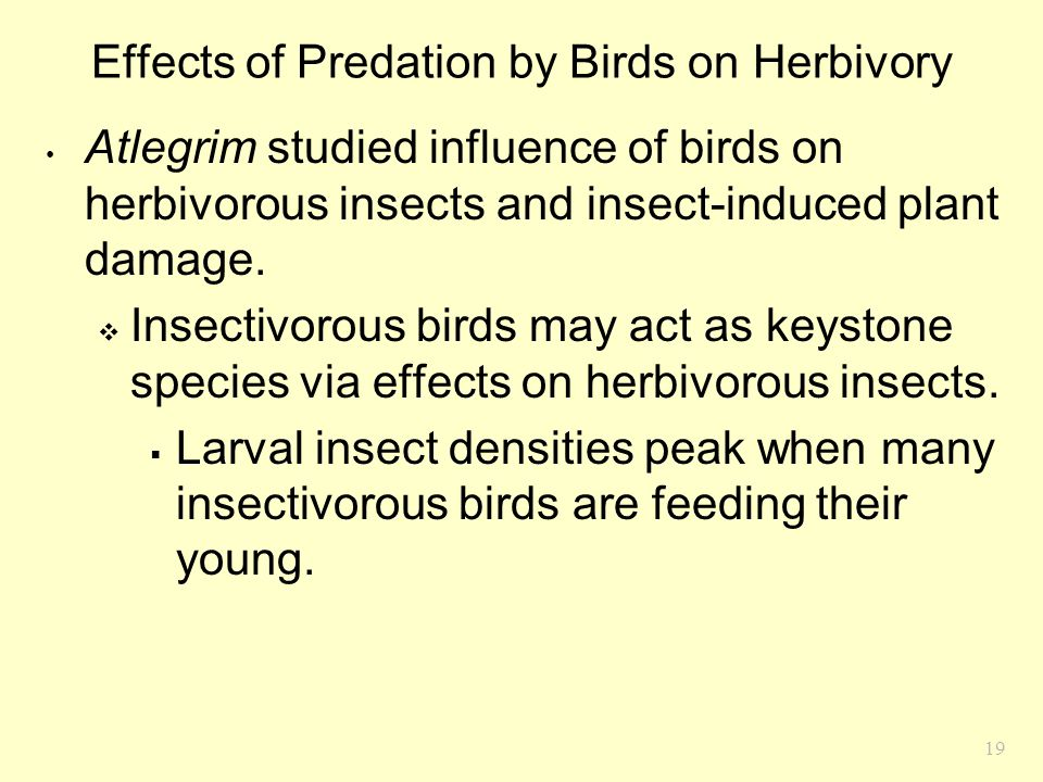 19 Effects of Predation by Birds on Herbivory Atlegrim studied influence of birds on herbivorous insects and insect-induced plant damage.  Insectivor