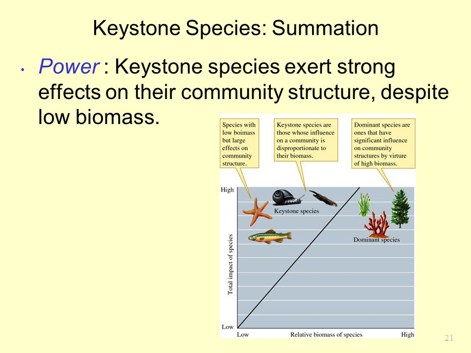 21 Keystone Species: Summation Power : Keystone species exert strong effects on their community structure, despite low biomass.