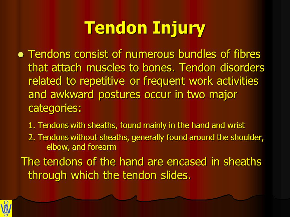 Tendon Injury Tendons consist of numerous bundles of fibres that attach muscles to bones.
