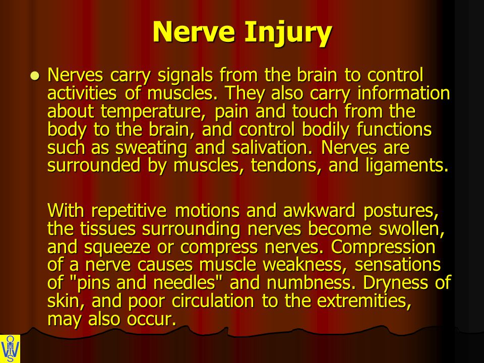 Nerve Injury Nerves carry signals from the brain to control activities of muscles.