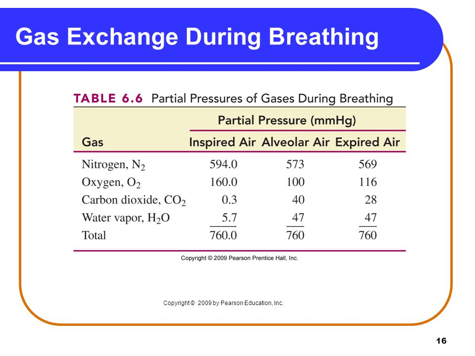 16 Gas Exchange During Breathing Copyright © 2009 by Pearson Education, Inc.