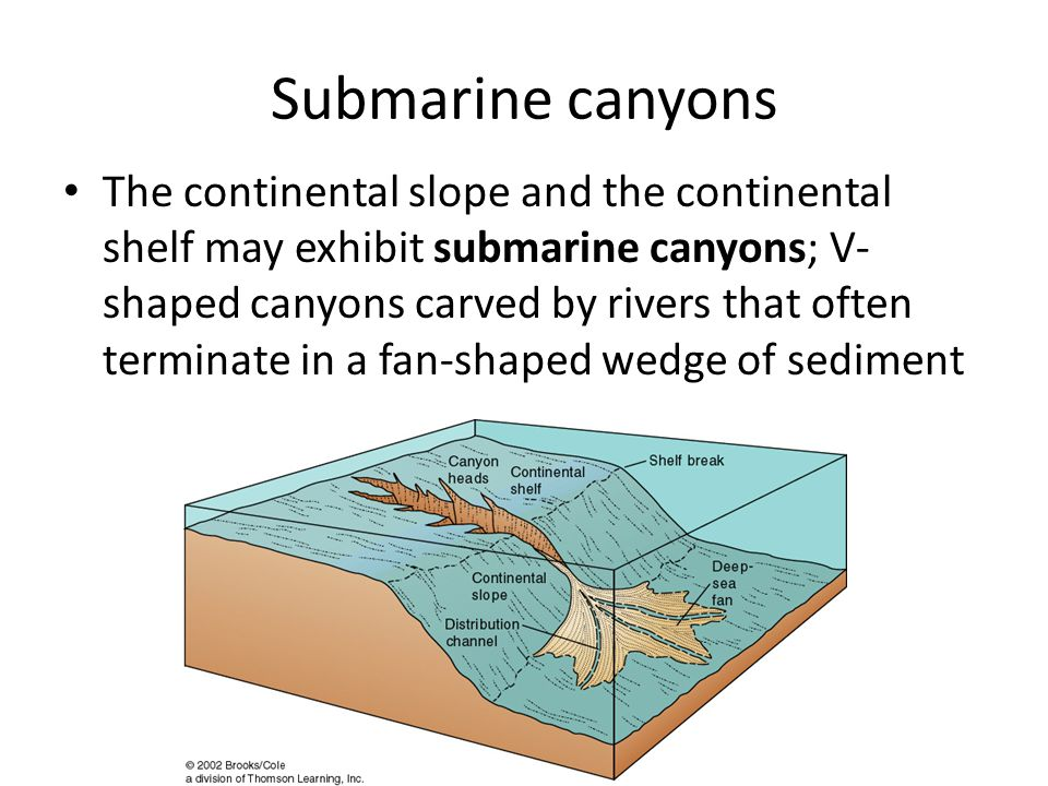 Submarine canyons The continental slope and the continental shelf may exhibit submarine canyons; V- shaped canyons carved by rivers that often terminate in a fan-shaped wedge of sediment
