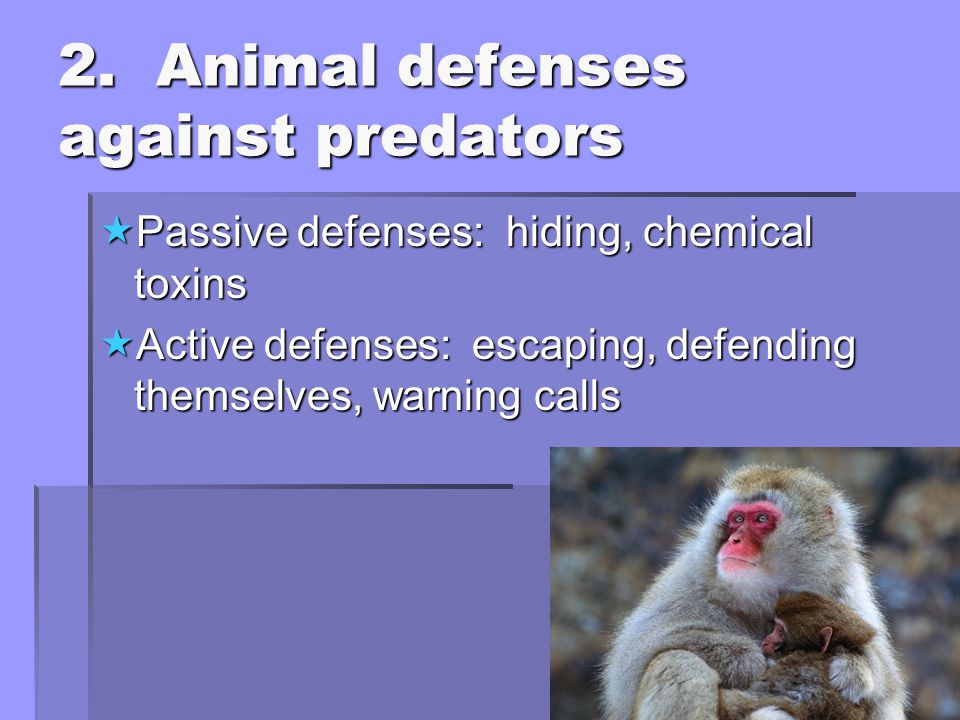 2. Animal defenses against predators  Passive defenses: hiding, chemical toxins  Active defenses: escaping, defending themselves, warning calls