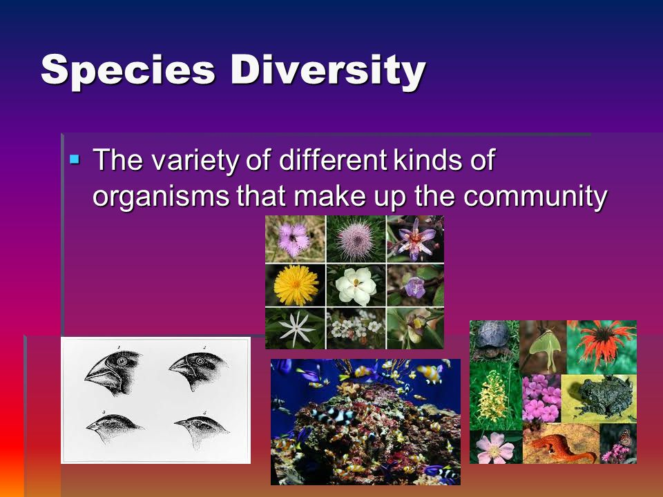 Species Diversity  The variety of different kinds of organisms that make up the community