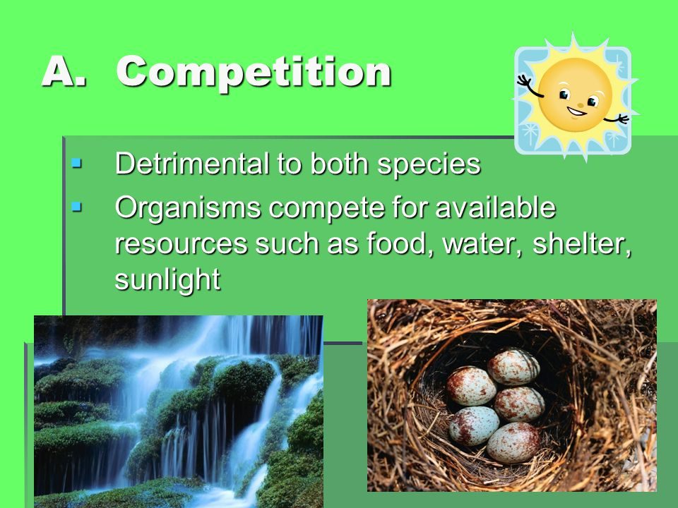 A. Competition  Detrimental to both species  Organisms compete for available resources such as food, water, shelter, sunlight