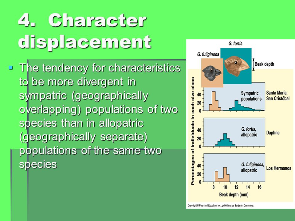 4. Character displacement  The tendency for characteristics to be more divergent in sympatric (geographically overlapping) populations of two species