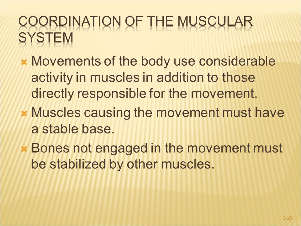 3-29  Movements of the body use considerable activity in muscles in addition to those directly responsible for the movement.  Muscles causing the mo