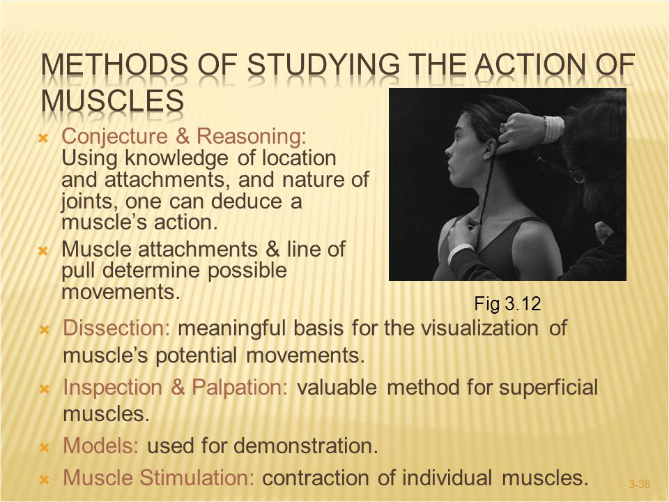 3-38  Conjecture & Reasoning: Using knowledge of location and attachments, and nature of joints, one can deduce a muscle's action.  Muscle attachmen