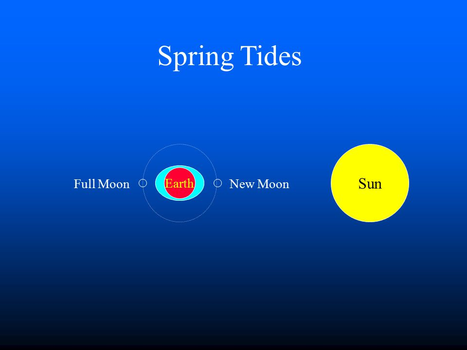 Ocean Tides n The Moon is primarily responsible for ocean tides on Earth. n The Sun contributes to tides also. n What are spring tides and neap tides?