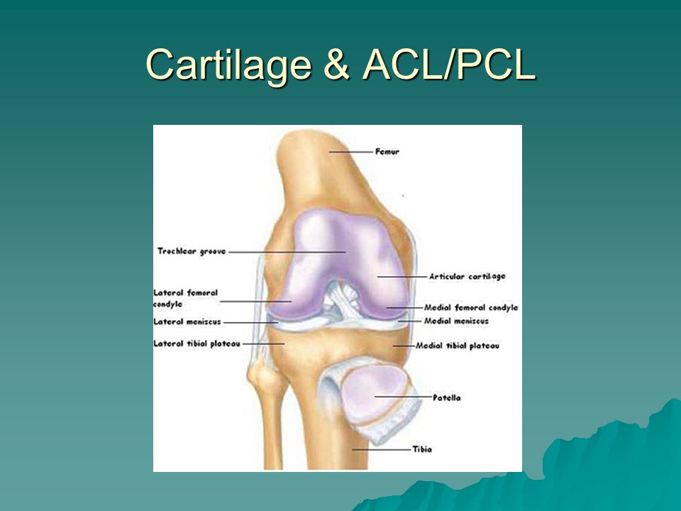 Cartilage & ACL/PCL