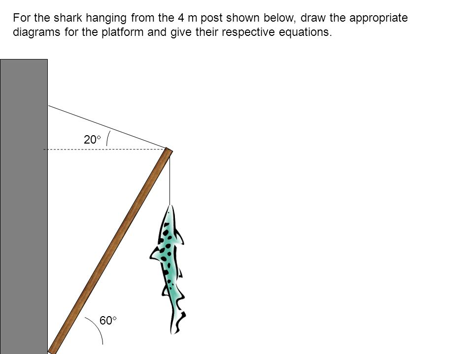 For the shark hanging from the 4 m post shown below, draw the appropriate diagrams for the platform and give their respective equations.