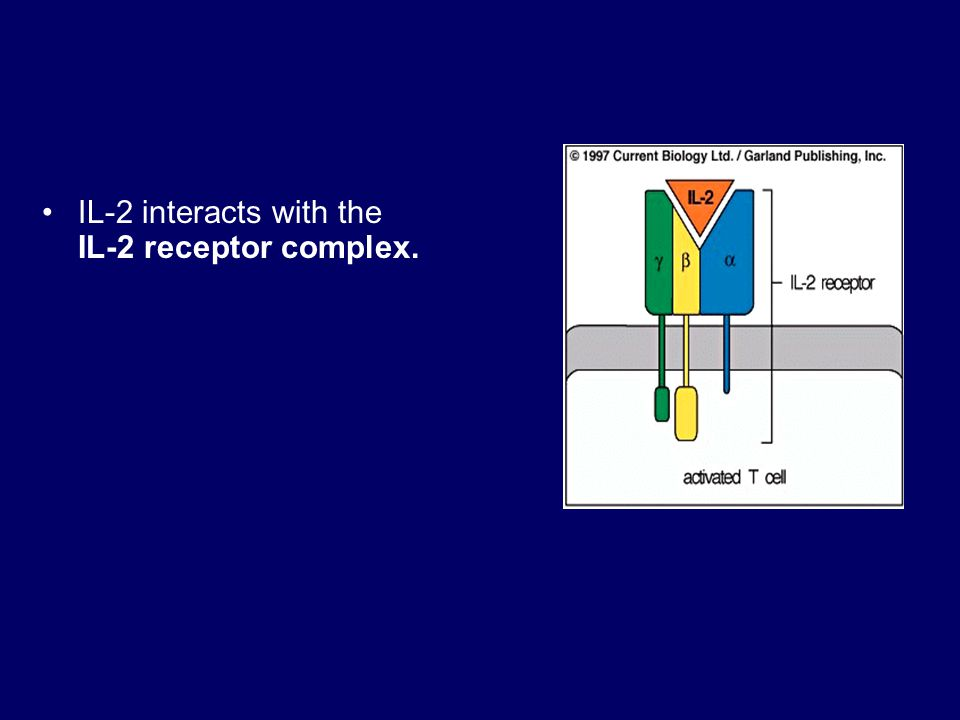 IL-2 interacts with the IL-2 receptor complex.