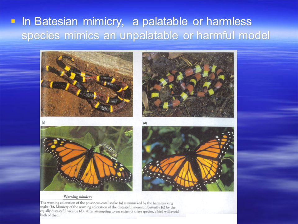  In Batesian mimicry, a palatable or harmless species mimics an unpalatable or harmful model