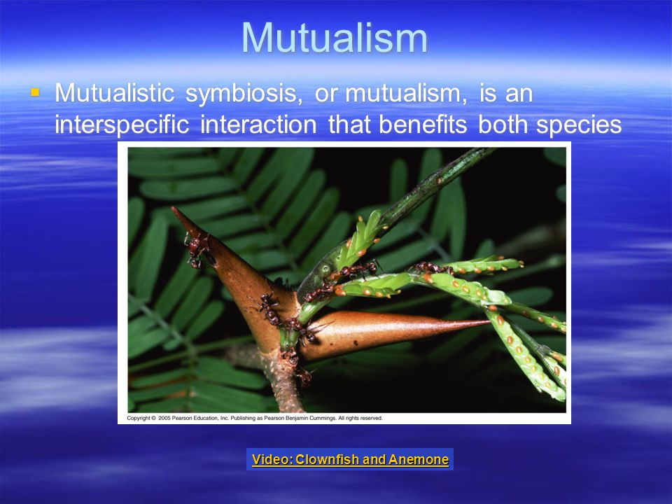Mutualism  Mutualistic symbiosis, or mutualism, is an interspecific interaction that benefits both species Video: Clownfish and Anemone Video: Clownfish and Anemone