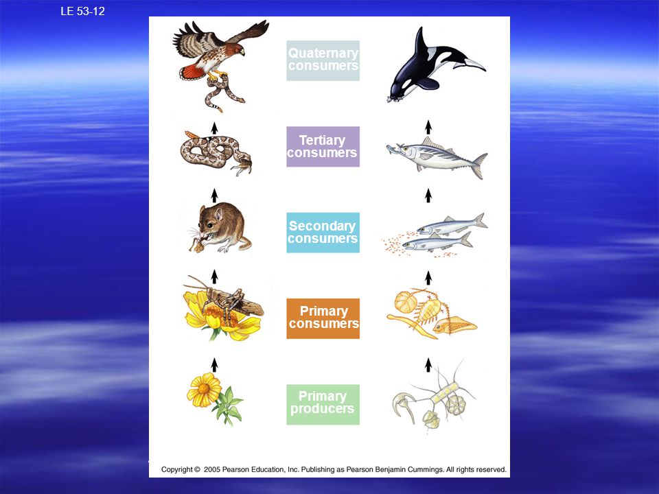 LE 53-12 Quaternary consumers Tertiary consumers Carnivore Secondary consumers Carnivore Primary consumers ZooplanktonHerbivore Primary producers Phytoplankton Plant A terrestrial food chain A marine food chain